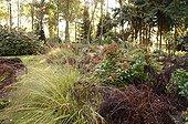 Hydrangea macrophylla ferns and Molinia Belgium