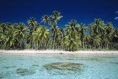 Small island and Coconuts Archipelago of Tuamotu French Polynesia