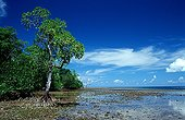 Mangroves island New Ireland Papua New Guinea