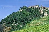 Village and vineyard of Château-Chalon Jura France