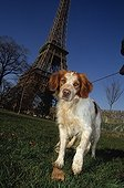 Dog leaves some in the lawn in front of the Eiffel Tower Fra