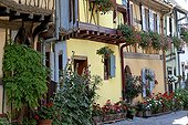 Flowered lane and half-timbered houses in Eguisheim France
