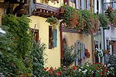 Old half-timbered houses with flowers Eguisheim France