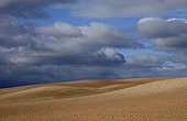 Plowed cereal field and thundery weather Spain