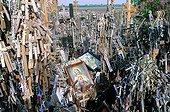 La Colline des Croix près de la ville de Siauliai, couverte de millions de croix, de crucifix et de statues votives de la Vierge et du Christ ; haut-lieu de pélerinage.