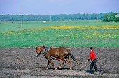 Travail dans les champs, labour