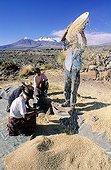 Moisson dans la région de San Pedro de Atacama, tamis
