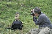 Photograph and Alpine Marmot  Hohe Tauern Austria