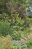 Bordure fleurie au Jardin de Valérianes Seine-Maritime