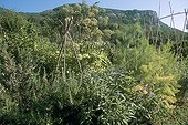 Aromatic plants garden Courmes Provence France