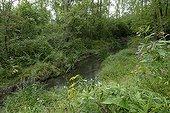 """Bras du Rhin coulant dans la forêt alluviale Bas-Rhin France ; Un an après les travaux de remise en circulation de l'eau dans le cadre du programme Life """"Rhin vivant"""" à La Wantzenau."""
