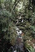 Ruisseau en forêt atlantique Espirito Santo Brésil