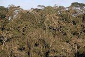 Forêt tropicale Espirito Santo Brésil ; Altitude : 1100 m