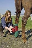 Adolescente fixant un bandange sur la patte d'un Cheval