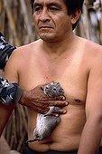 Traditional medicine using a guinea-pig Peru