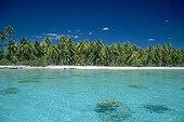 Rivage et plage de sable avec cocotiers Polynésie Française ; Site : Toau