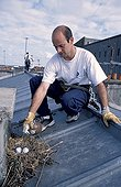 Semi-skilled workers sterilizing eggs of Seagull Brest