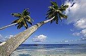 Coconut palms and beach scene La Digue Island Seychelles