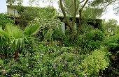 Maison fleurie du Jardin de la Pomme d'Ambre ; Rosier 'Madame Isaac Pereine'