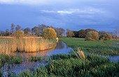 Flooded Goulaine marsh France