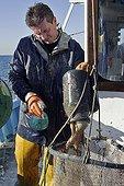 Vidage d'une amphore de pêche au poulpe Camargue France ; le Grau du Roi