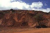Exploitation minière à ciel ouvert Nouvelle-Calédonie ; Les décapages miniers détruisent des populations entières d'espèces, contribuant à l'érosion de la biodiversité. Une très faible proportion des zones est réhabilitée et elle l'est, dans plus de 90% des cas, avec deux espèces invasives grégaires, le Gaïac (Acacia spirorbis) et le Bois de fer (Casuarina collina).