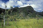 Falaise et prairies humides de Karekare Nouvelle-Zélande ; Parc régional de Waitakere. D'une superficie de 18 000 ha, cette zone abrite une forêt dense humide originelle. Celle-ci fût exploitée pour son bois à l'arrivée des Européens qui s'y installèrent à partir de 1840.