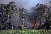 Feu dans la savane à Niaoulis Nouvelle-Calédonie ; Les feux et les activités minières sont les principaux facteurs de la disparitions des massifs forestiers et de la biodiversité.