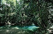 Freshwater spring in rainforest Borneo Malaysia