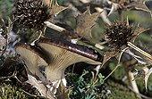 Flower Mushrooms and flowers of Seaside Eryngo France