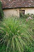 Fountaingrass at Apremont sur Allier