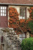 Frontage covered with Pyracantha with Apremont sur Allier