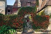 Firethorn arch at Apremont sur Allier