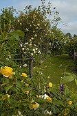 Vue d'ensemble du Jardin des Rosiers dans la Vienne ; Rosier 'Graham Thomas'. Rosier 'Lady Hillingdon'. Rosier 'Mme Plantier'