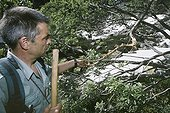 Discovery of branches of birch bitten by a bear France ; Localization: near Ax les thermes, in haute Ariège; june 2001.