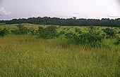 Savane et forêt galerie dans l'aire protégée de Gamba Gabon ; @ Gamba (complexe d'aires protégées)