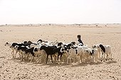 Tuareg child and herd of goats of Desert of Tenere Niger