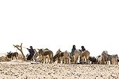 Tuaregs at wells with their herds Desert of Tenere Niger