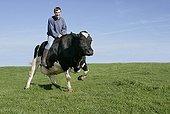 Adolescent s'amusant à chevaucher une Vache France