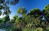 Eucalyptus in Beauregard Florilegium France