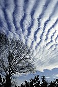 Cirrocumulus above Normandy in winter France