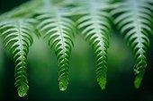 Young fern leafing France