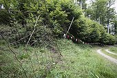 Large marking mammalian France ; Nets and banderolles