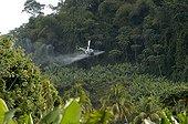 Plant health air spreading on banana plantations Martinique ; Cultivar of Banana : 'Grande naine'
