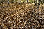 Forêt tempérée de feuillus en automne France