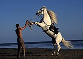 Man's nose gray Andalusian horse on the beach