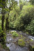 River in dense evergreen forest Cost Rica