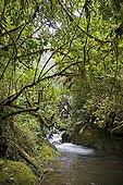 River in dense evergreen forest Costa Rica ; Site: La Paz waterfall gardens