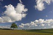 Growing grain Auvergne France ; Location: Chidrac