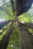 Forêt primaire Danum Valley Conservation Area Malaisie